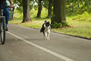 A dog running in the park with his owner who is riding a bike and trying to make friends after moving.
