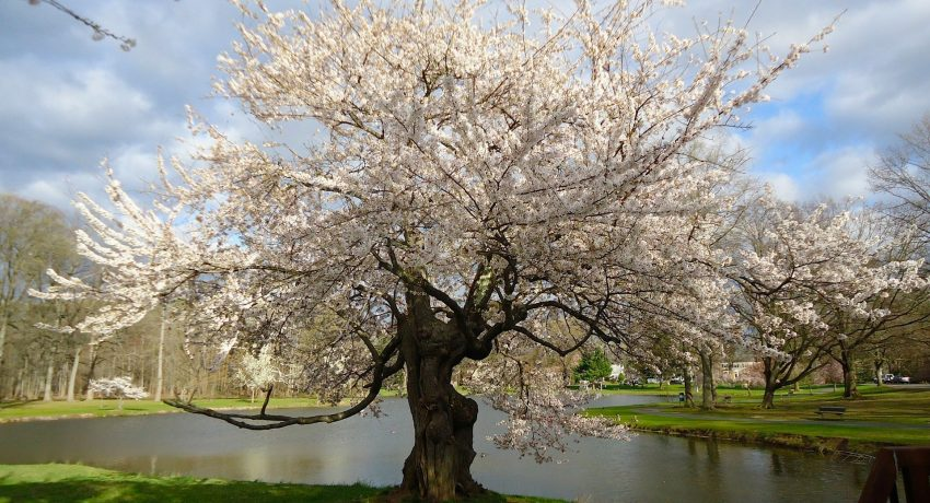 A tree in New Jersey representing the most beautiful quiet towns in NJ.