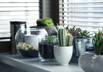 Pots with plants next to a kitchen window.