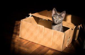 A cat in a cardboard box