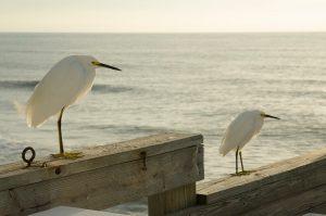 Two birds on the ocean shore.